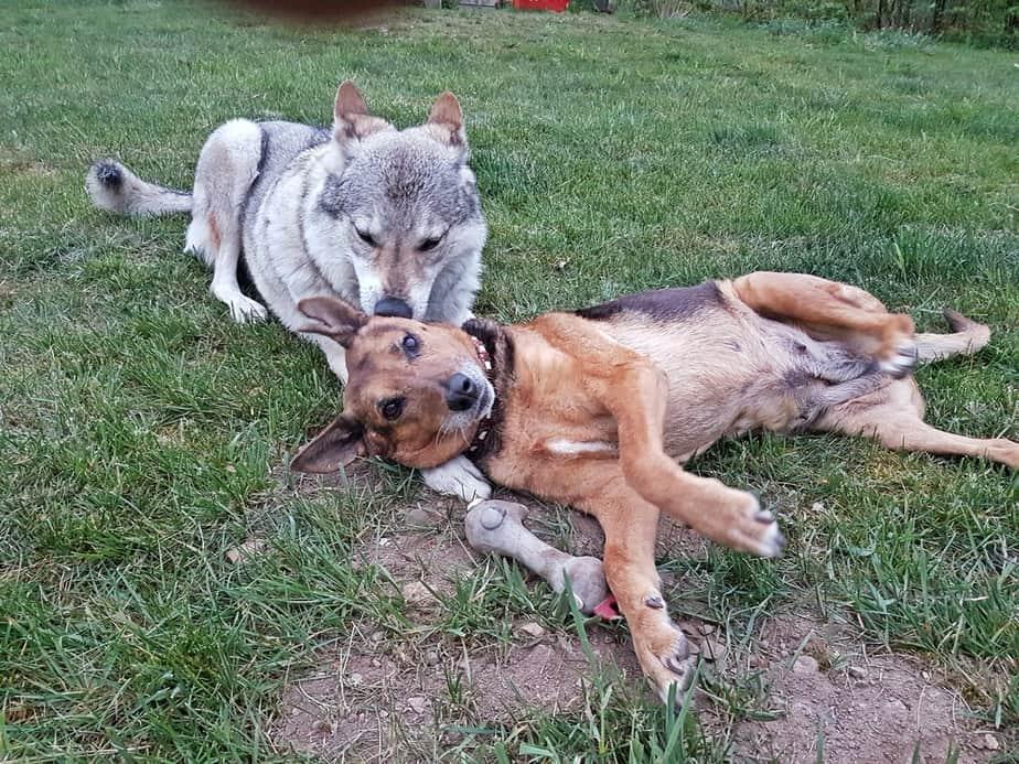 Hund abzugeben - oder eher keine Lust auf Verantwortung?
