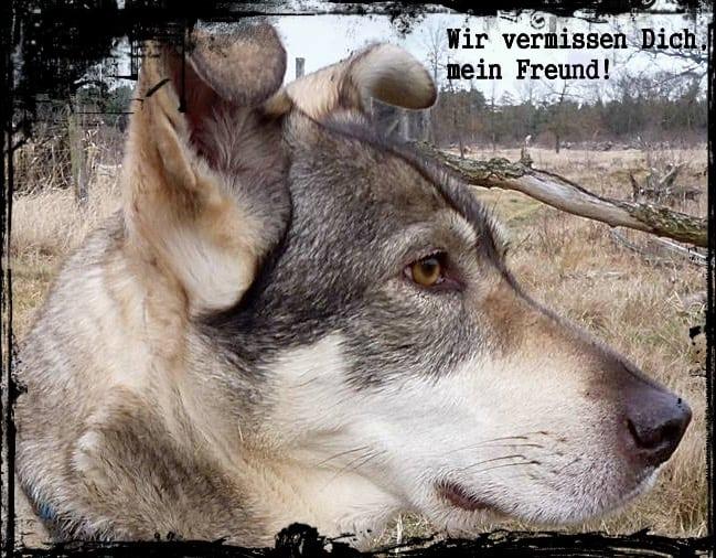 Wir vermissen Dich, kleines Wölfchen.....